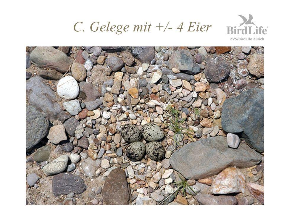 C. Gelege mit +/- 4 Eier