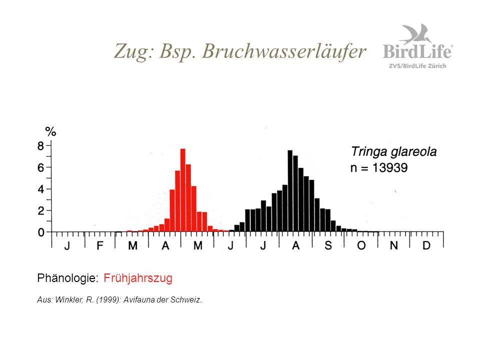 Limikolen bestimmen 2. Die Kurzschnäbligen Kiebitz Flussregenpfeifer Sandregenpfeifer