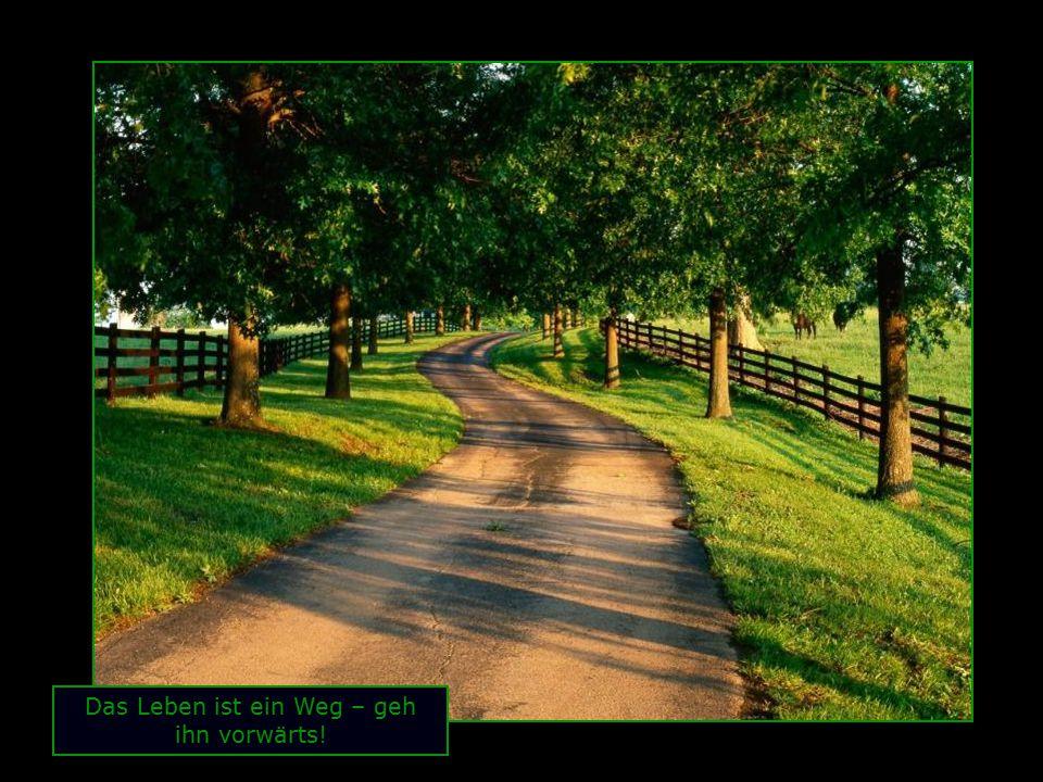 Das Leben ist ein Weg – geh ihn vorwärts!