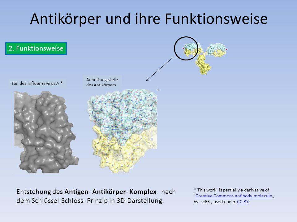 2. Funktionsweise Antikörper und ihre Funktionsweise Teil des Influenzavirus A * * This work is partially a derivative of