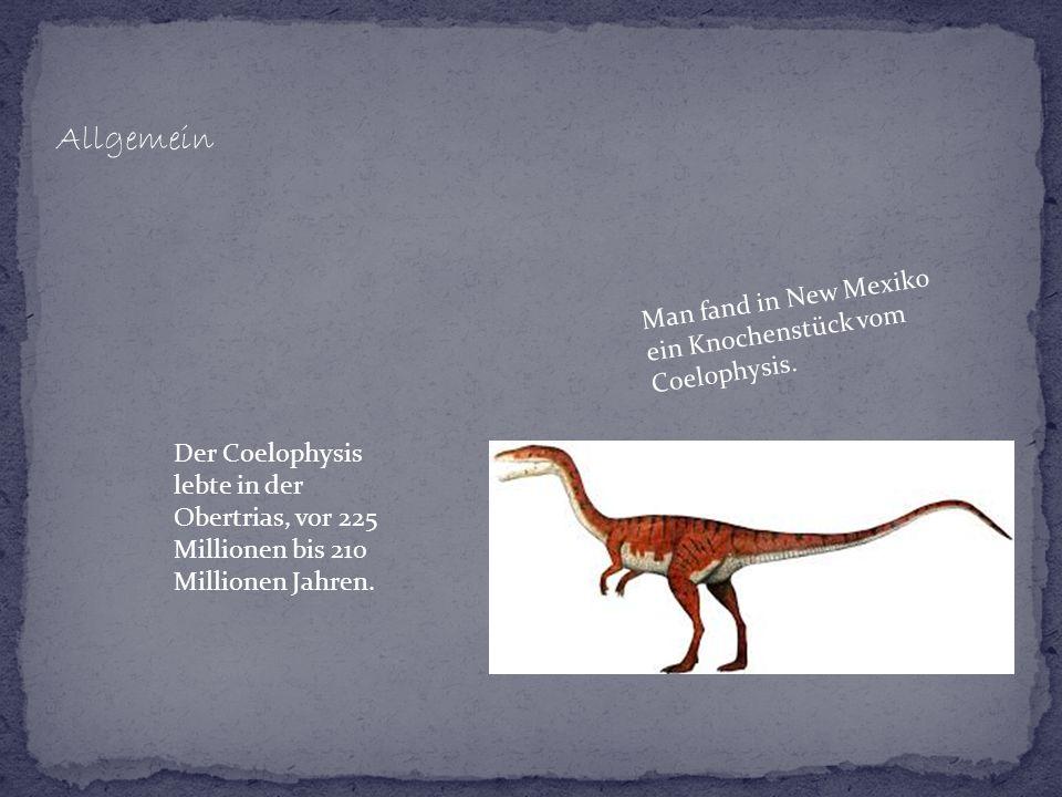 Allgemein Der Coelophysis lebte in der Obertrias, vor 225 Millionen bis 210 Millionen Jahren. Man fand in New Mexiko ein Knochenstück vom Coelophysis.