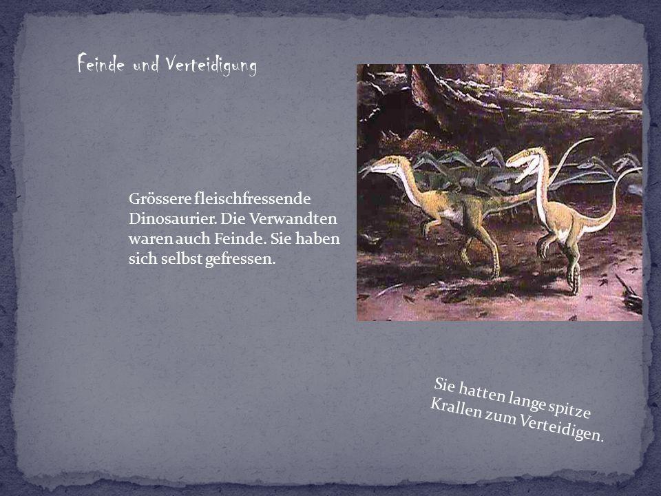 Feinde und Verteidigung Grössere fleischfressende Dinosaurier. Die Verwandten waren auch Feinde. Sie haben sich selbst gefressen. Sie hatten lange spi