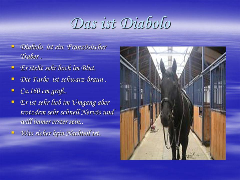 Das ist Diabolo  Diabolo ist ein Französischer Traber.  Er steht sehr hoch im Blut.  Die Farbe ist schwarz-braun.  Ca.160 cm groß..  Er ist sehr