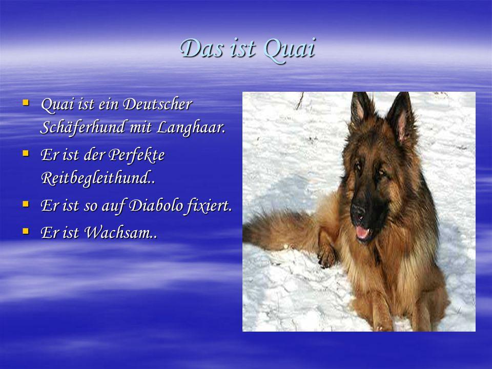 Das ist Quai  Quai ist ein Deutscher Schäferhund mit Langhaar.  Er ist der Perfekte Reitbegleithund..  Er ist so auf Diabolo fixiert.  Er ist Wach