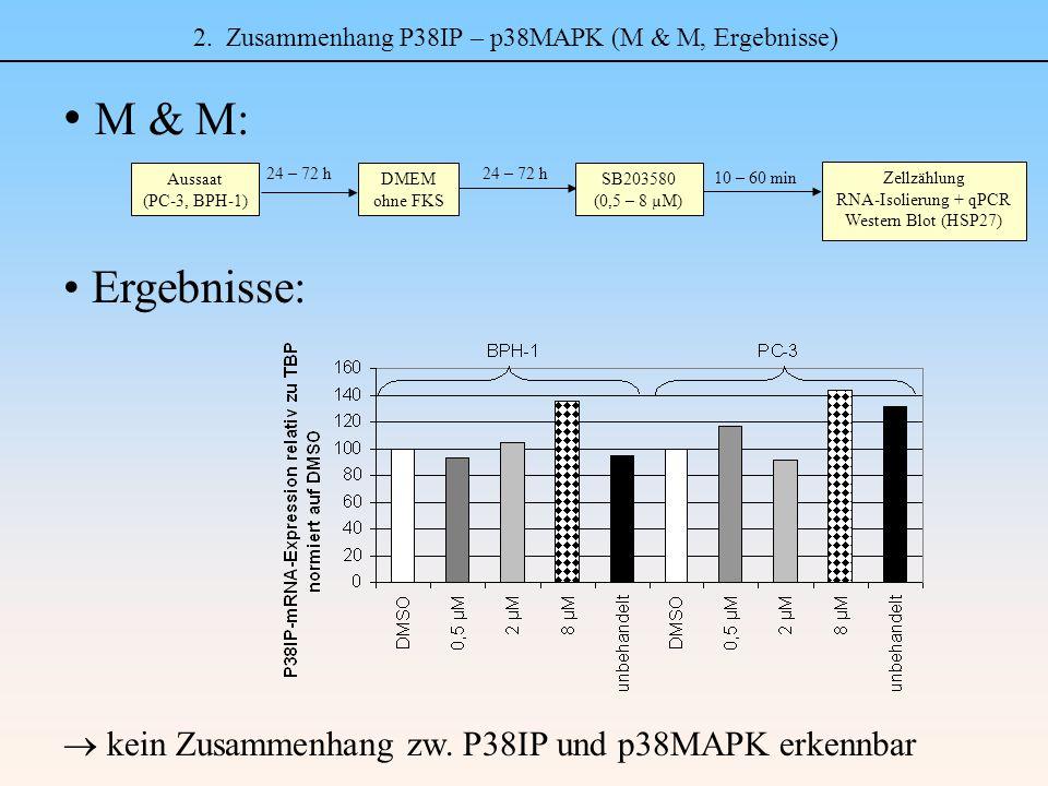 2. Zusammenhang P38IP – p38MAPK (M & M, Ergebnisse) M & M: Ergebnisse: Aussaat (PC-3, BPH-1) DMEM ohne FKS 24 – 72 h Zellzählung RNA-Isolierung + qPCR
