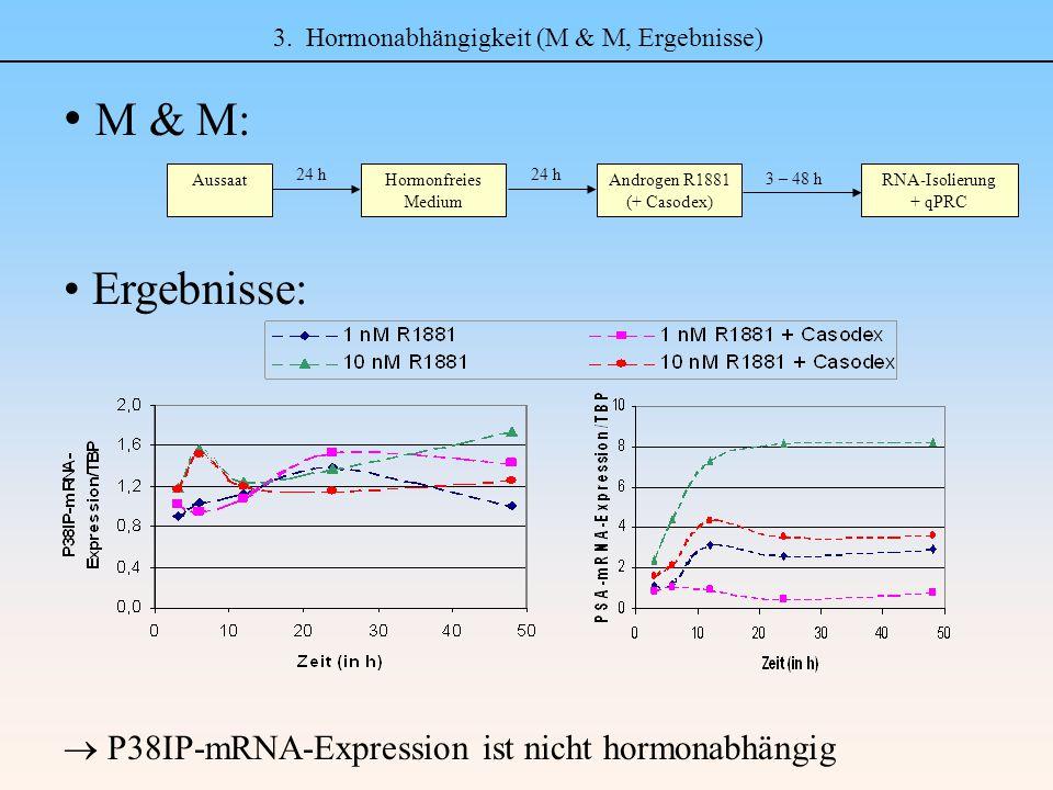 3. Hormonabhängigkeit (M & M, Ergebnisse) M & M: Ergebnisse:  P38IP-mRNA-Expression ist nicht hormonabhängig AussaatHormonfreies Medium 24 h 3 – 48 h