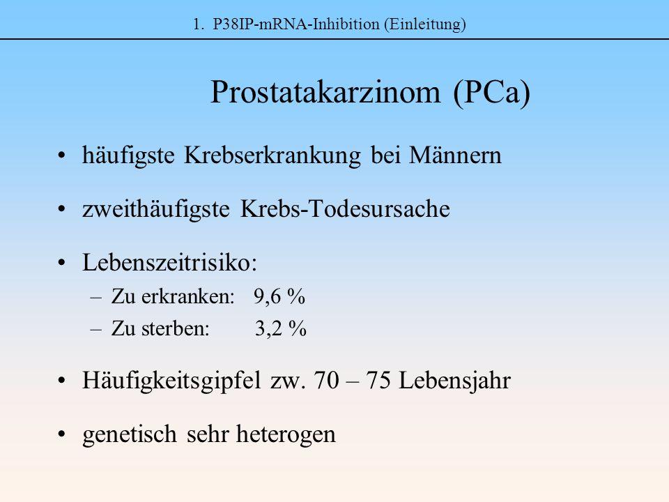 1. P38IP-mRNA-Inhibition (Einleitung) Prostatakarzinom (PCa) häufigste Krebserkrankung bei Männern zweithäufigste Krebs-Todesursache Lebenszeitrisiko: