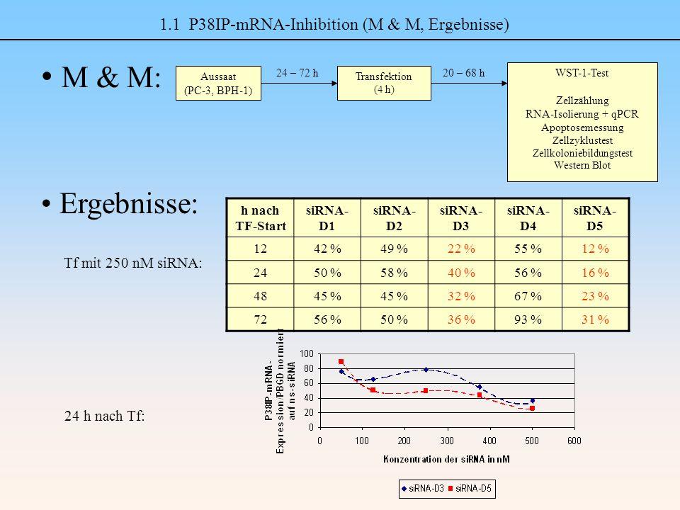 1.1 P38IP-mRNA-Inhibition (M & M, Ergebnisse) M & M: Ergebnisse: h nach TF-Start siRNA- D1 siRNA- D2 siRNA- D3 siRNA- D4 siRNA- D5 1242 %49 %22 %55 %12 % 2450 %58 %40 %56 %16 % 4845 % 32 %67 %23 % 7256 %50 %36 %93 %31 % Aussaat (PC-3, BPH-1) Transfektion (4 h) 24 – 72 h WST-1-Test Zellzählung RNA-Isolierung + qPCR Apoptosemessung Zellzyklustest Zellkoloniebildungstest Western Blot 20 – 68 h Tf mit 250 nM siRNA: 24 h nach Tf: