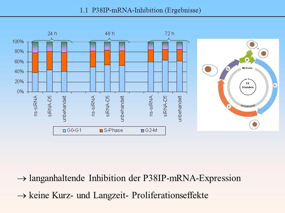 1.2 Chemoprotektion (M & M, Ergebnisse) M & M: Ergebnisse: CT (Etoposid, Docetaxel; 24 h) Aussaat (PC-3) Transfektion (4 h) 24 – 72 h20 h WST-1-Test Zellzählung Apoptosemessung Zellzyklustest 24 – 72 h WST-1-Test: 96 h nach Tf