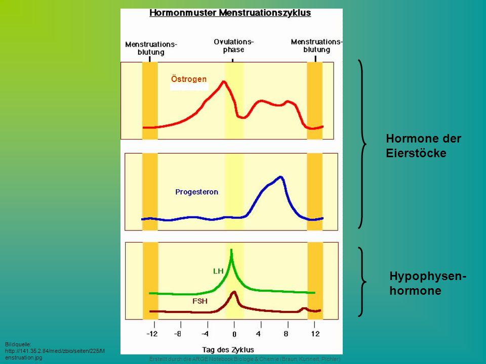 Erstellt durch die ARGE Notebook Biologie & Chemie (Braun, Kunnert, Pichler) Bildquelle: http://141.35.2.84/med/zbio/seiten/225/M enstruation.jpg Östr