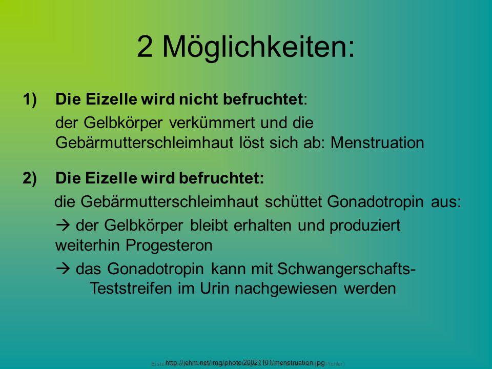 Erstellt durch die ARGE Notebook Biologie & Chemie (Braun, Kunnert, Pichler) 2 Möglichkeiten: 1)Die Eizelle wird nicht befruchtet: der Gelbkörper verk
