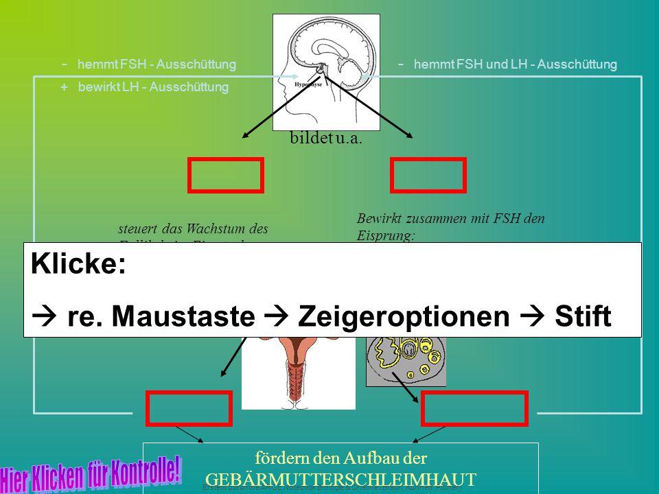 Erstellt durch die ARGE Notebook Biologie & Chemie (Braun, Kunnert, Pichler) steuert das Wachstum des Follikels im Eierstock bildet u.a. Bewirkt zusam