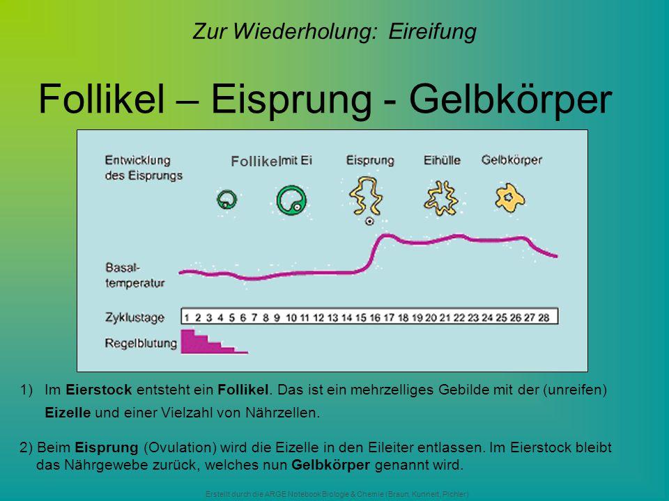 Erstellt durch die ARGE Notebook Biologie & Chemie (Braun, Kunnert, Pichler) Follikel – Eisprung - Gelbkörper Zur Wiederholung: Eireifung Follikel 1)I