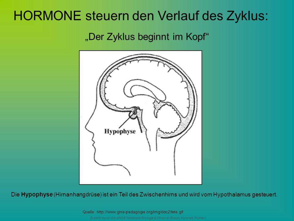 """Erstellt durch die ARGE Notebook Biologie & Chemie (Braun, Kunnert, Pichler) """"Der Zyklus beginnt im Kopf"""" Quelle: http://www.gnis-pedagogie.org/img/do"""