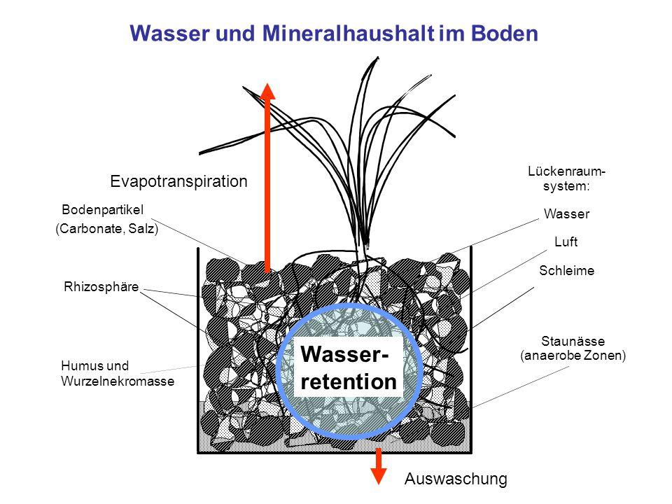 Wasser und Mineralhaushalt im Boden Lückenraum- system: Wasser Luft Schleime Staunässe (anaerobe Zonen) Rhizosphäre Bodenpartikel (Carbonate, Salz) Hu