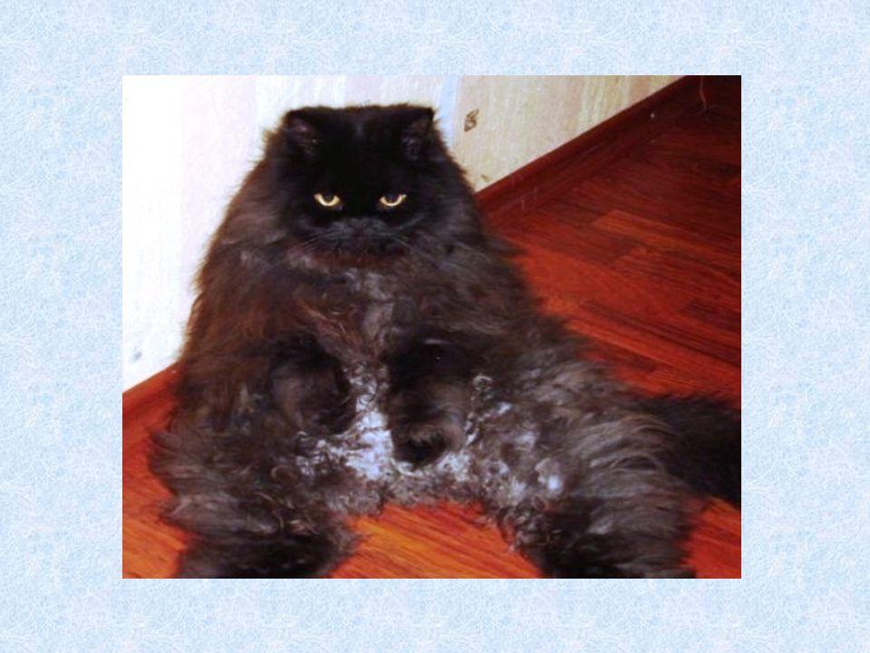 Das ist ein Hund. Er ist schwarz-braun.