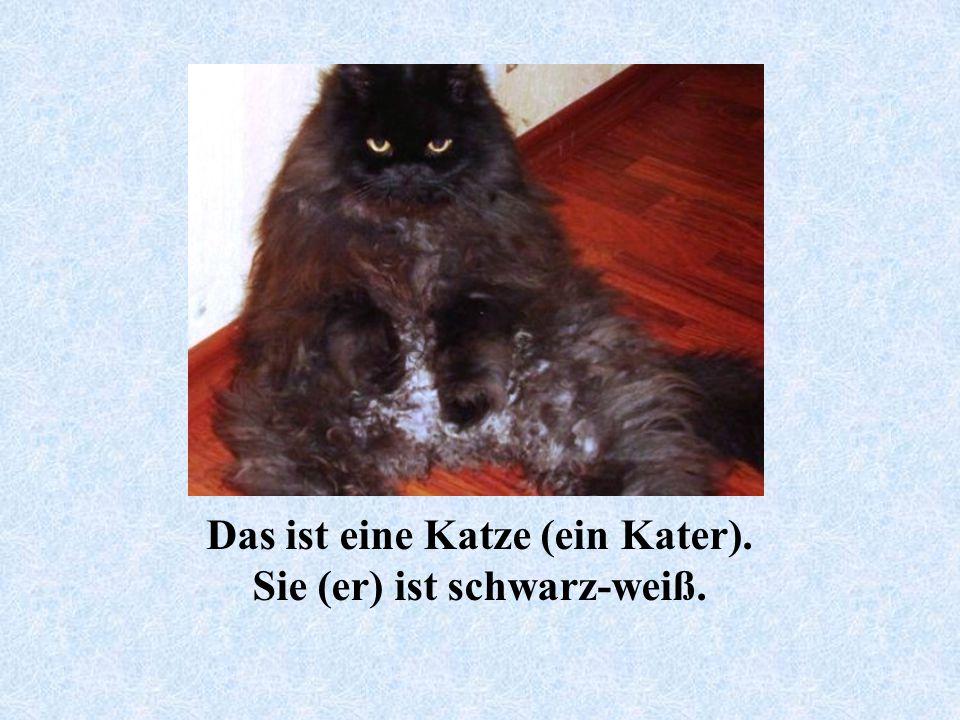 Das ist eine Katze (ein Kater). Sie (er) ist schwarz-weiß.