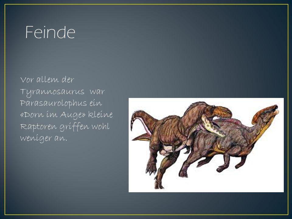 Hupe oder Trompete Der nach hinten gerichtete Kamm des Parasaurolophus war hohl wie eine Röhre.