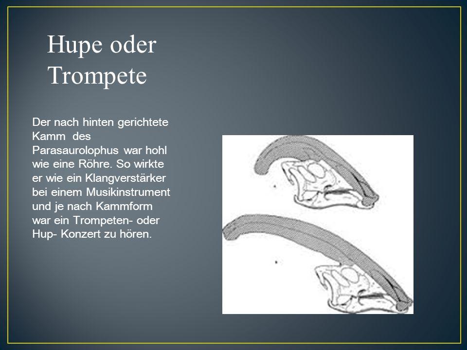 Hupe oder Trompete Der nach hinten gerichtete Kamm des Parasaurolophus war hohl wie eine Röhre. So wirkte er wie ein Klangverstärker bei einem Musikin