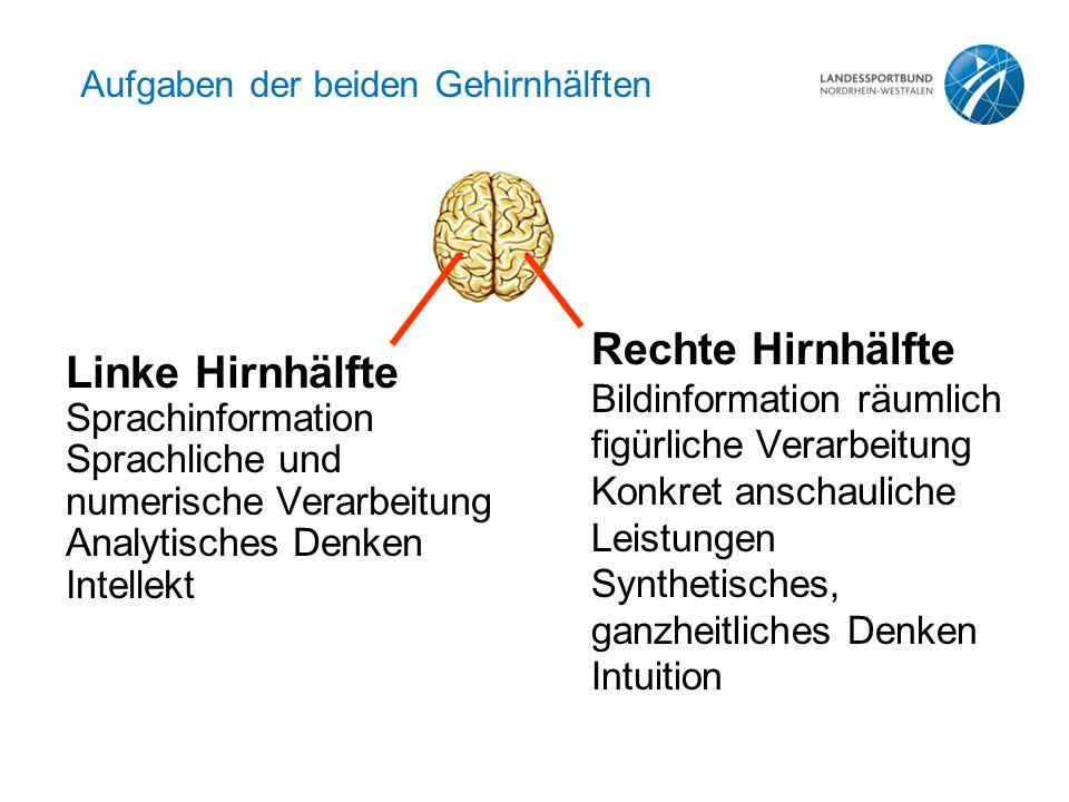 Aufgaben der beiden Gehirnhälften Linke Hirnhälfte Sprachinformation Sprachliche und numerische Verarbeitung Analytisches Denken Intellekt Rechte Hirn
