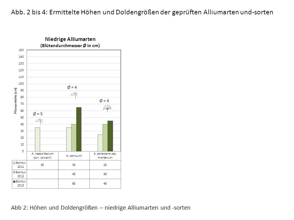 Ø = 4 Ø = 5 Abb 2: Höhen und Doldengrößen – niedrige Alliumarten und -sorten Abb.