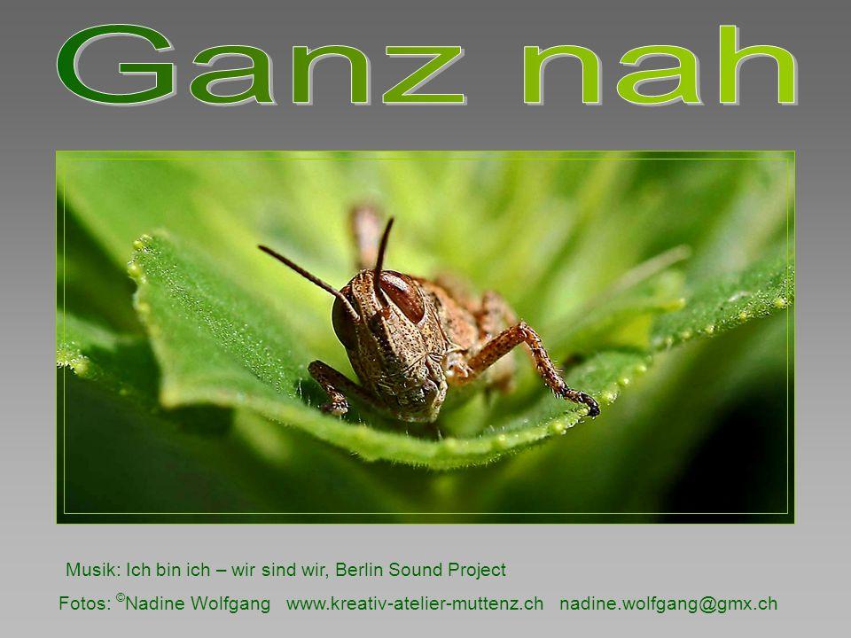 Fotos: © Nadine Wolfgang www.kreativ-atelier-muttenz.ch nadine.wolfgang@gmx.ch Musik: Ich bin ich – wir sind wir, Berlin Sound Project