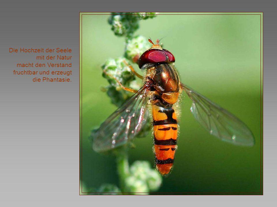 In jedem Geschöpf der Natur lebt das Wunderbare.