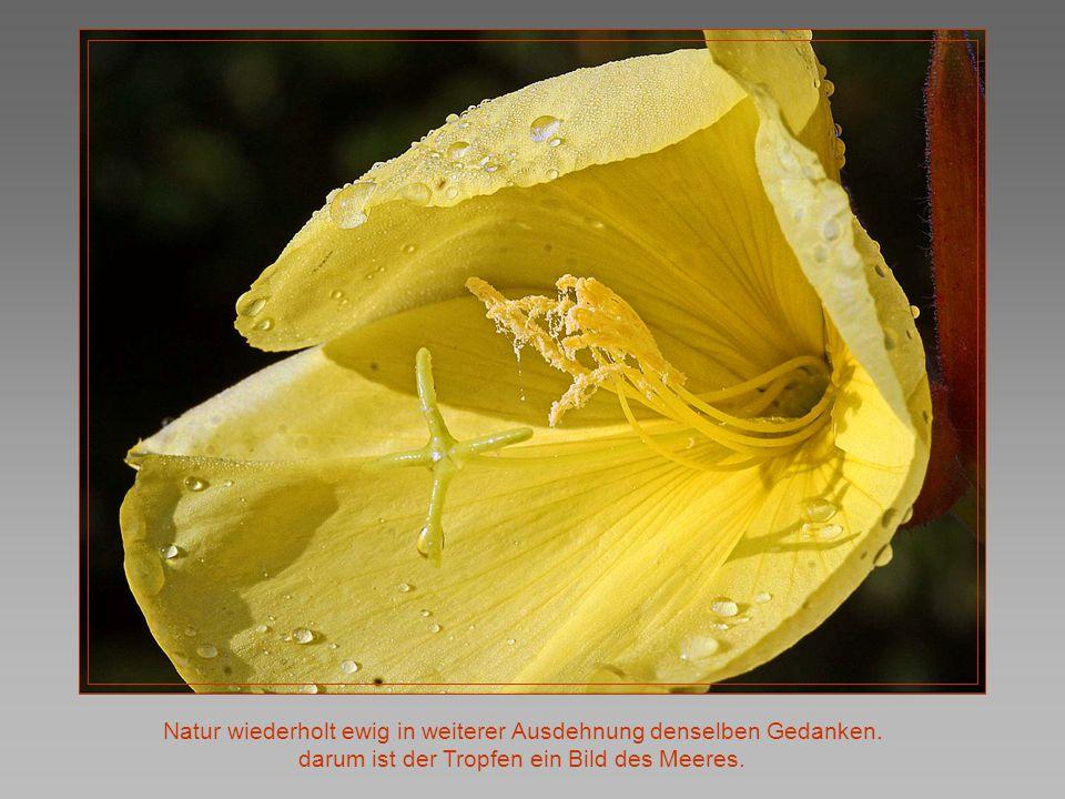 Natur wiederholt ewig in weiterer Ausdehnung denselben Gedanken.