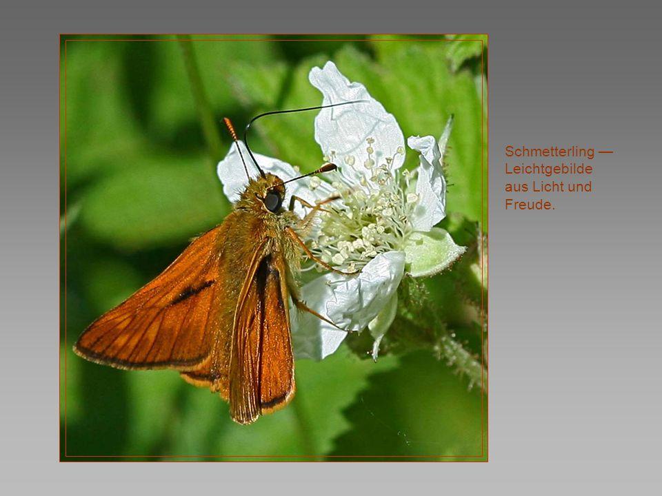 Schmetterling — Leichtgebilde aus Licht und Freude.