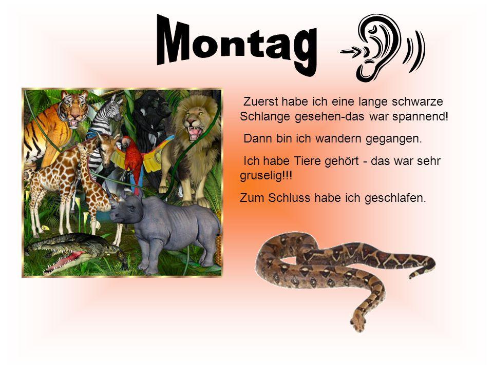 Zuerst habe ich eine lange schwarze Schlange gesehen-das war spannend! Dann bin ich wandern gegangen. Ich habe Tiere gehört - das war sehr gruselig!!!