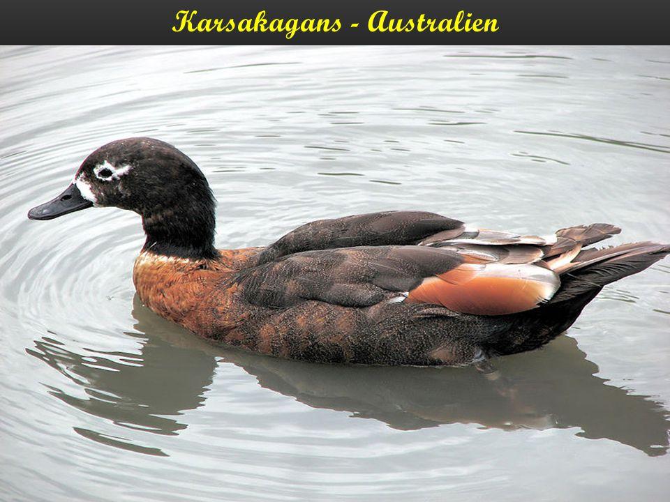 Karsakagans - Australien