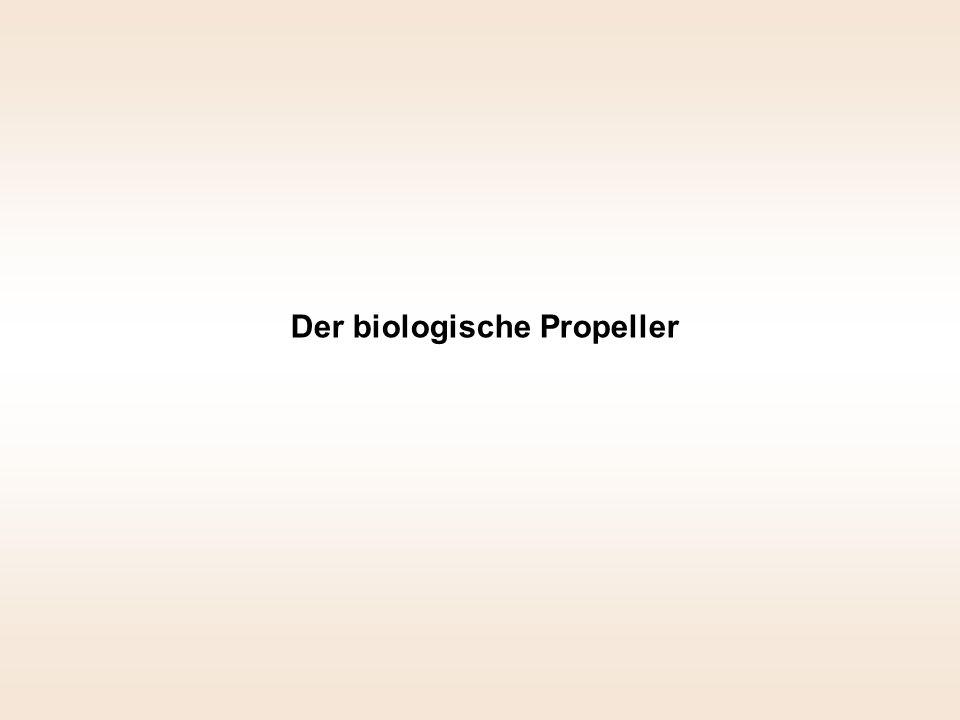 Der biologische Propeller