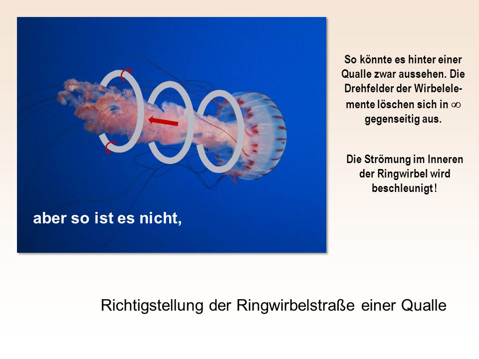 Richtigstellung der Ringwirbelstraße einer Qualle aber so ist es nicht, So könnte es hinter einer Qualle zwar aussehen.