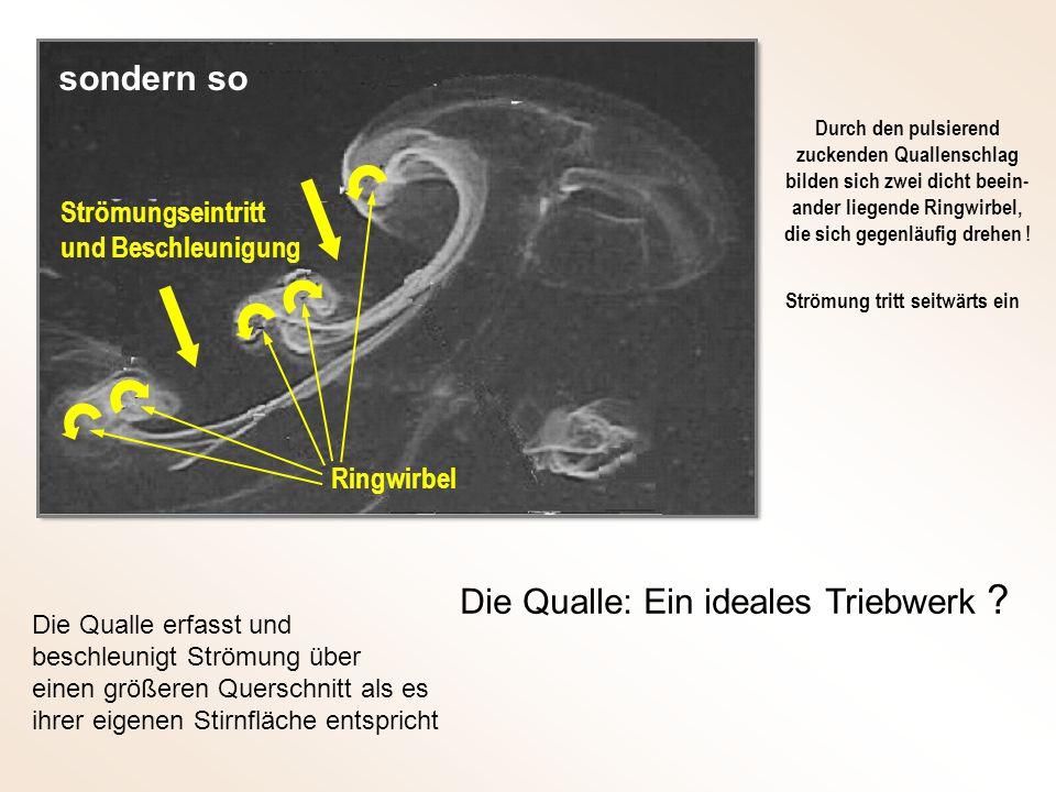 Strömungseintritt und Beschleunigung Die Qualle: Ein ideales Triebwerk .