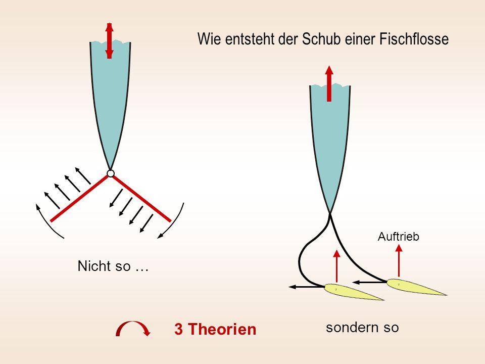 Nicht so … sondern so Wie entsteht der Schub einer Fischflosse Auftrieb 3 Theorien