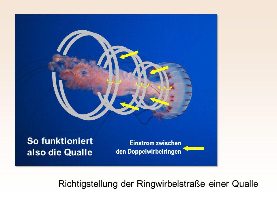 Richtigstellung der Ringwirbelstraße einer Qualle Einstrom zwischen den Doppelwirbelringen So funktioniert also die Qualle