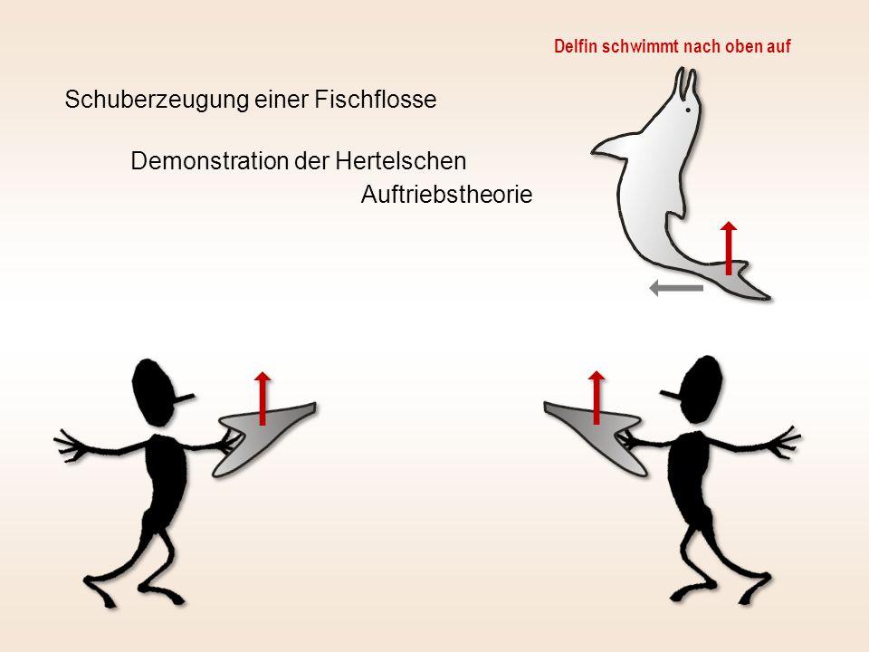 Schuberzeugung einer Fischflosse Demonstration der Hertelschen Auftriebstheorie Delfin schwimmt nach oben auf