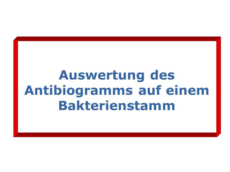 Auswertung des Antibiogramms auf einem Bakterienstamm