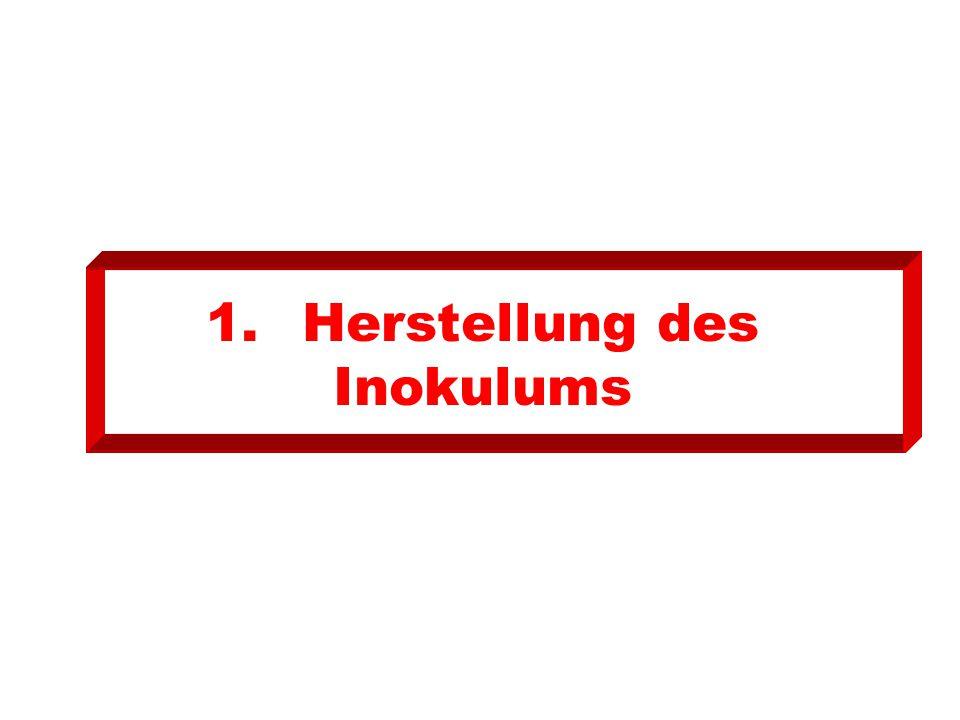 1.Herstellung des Inokulums