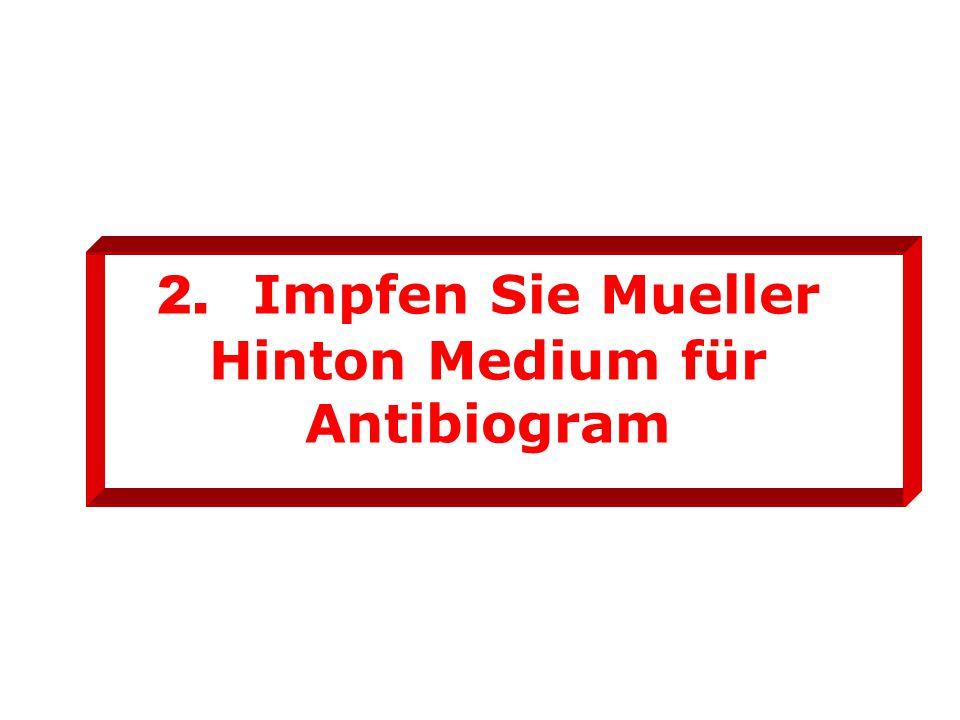 2. Impfen Sie Mueller Hinton Medium für Antibiogram