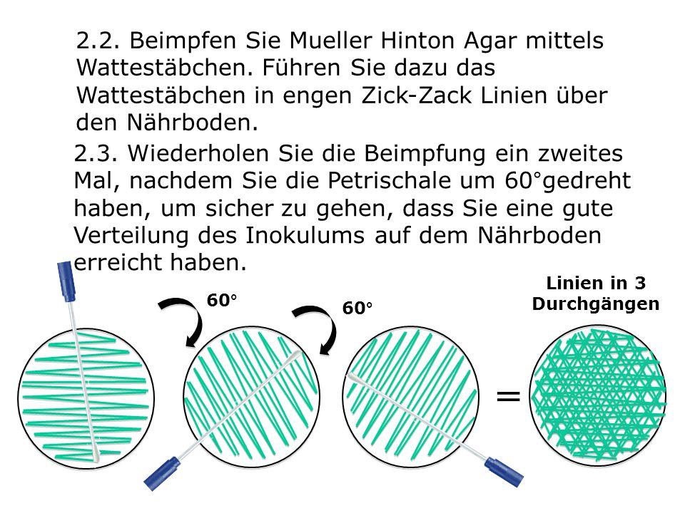 2.2. Beimpfen Sie Mueller Hinton Agar mittels Wattestäbchen. Führen Sie dazu das Wattestäbchen in engen Zick-Zack Linien über den Nährboden. 2.3. Wied