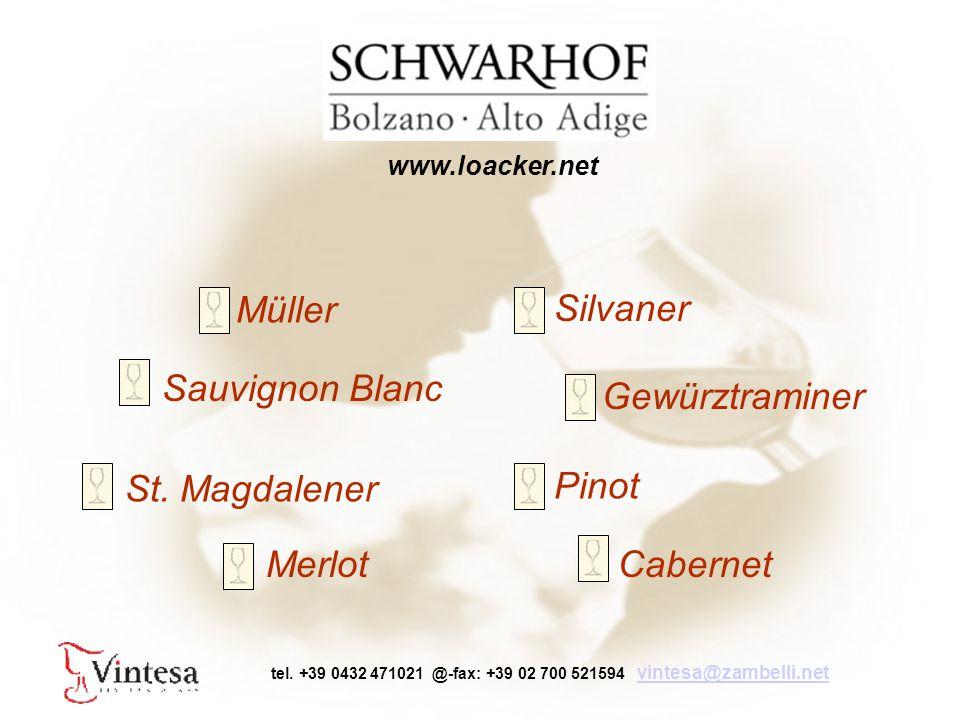 Müller Silvaner Sauvignon Blanc St. Magdalener Merlot Pinot Gewürztraminer Cabernet tel.