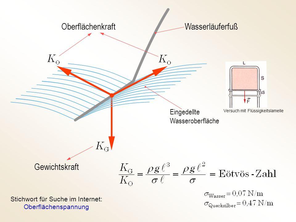 Oberflächenkraft Gewichtskraft Wasserläuferfuß Eingedellte Wasseroberfläche Stichwort für Suche im Internet: Oberflächenspannung Versuch mit Flüssigke