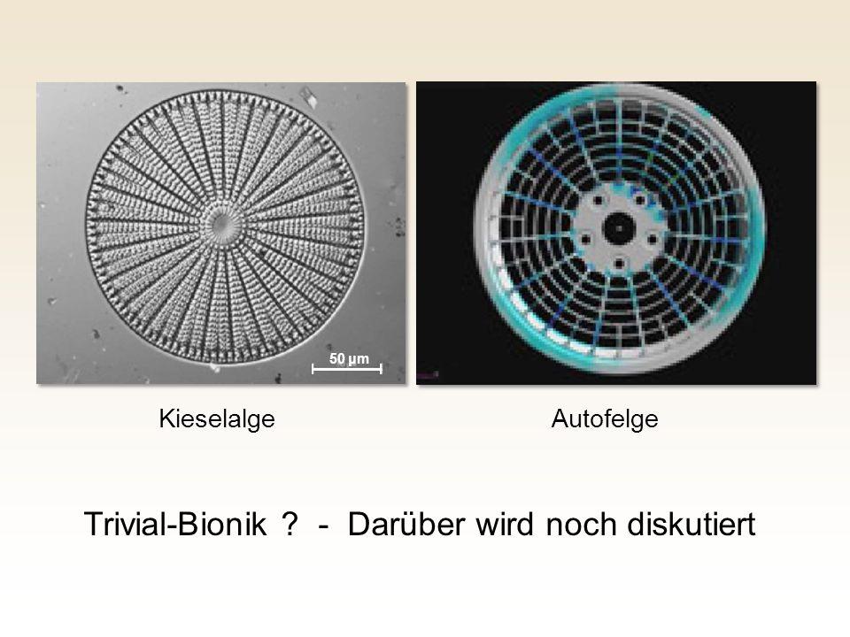 Kieselalge Autofelge Trivial-Bionik ? - Darüber wird noch diskutiert 50 μm