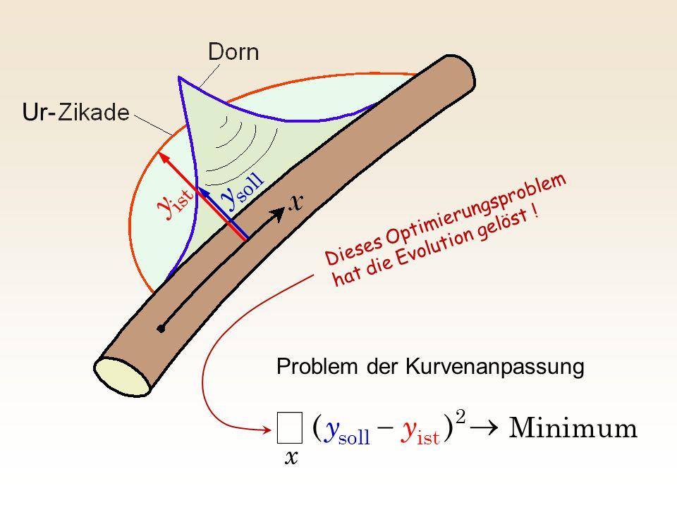 Minimum 2 istsoll )(    x yy Problem der Kurvenanpassung soll y ist y Ur- Dieses Optimierungsproblem hat die Evolution gelöst !