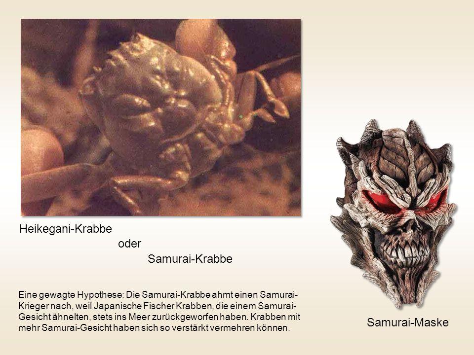 Heikegani-Krabbe oder Samurai-Krabbe Samurai-Maske Eine gewagte Hypothese: Die Samurai-Krabbe ahmt einen Samurai- Krieger nach, weil Japanische Fische
