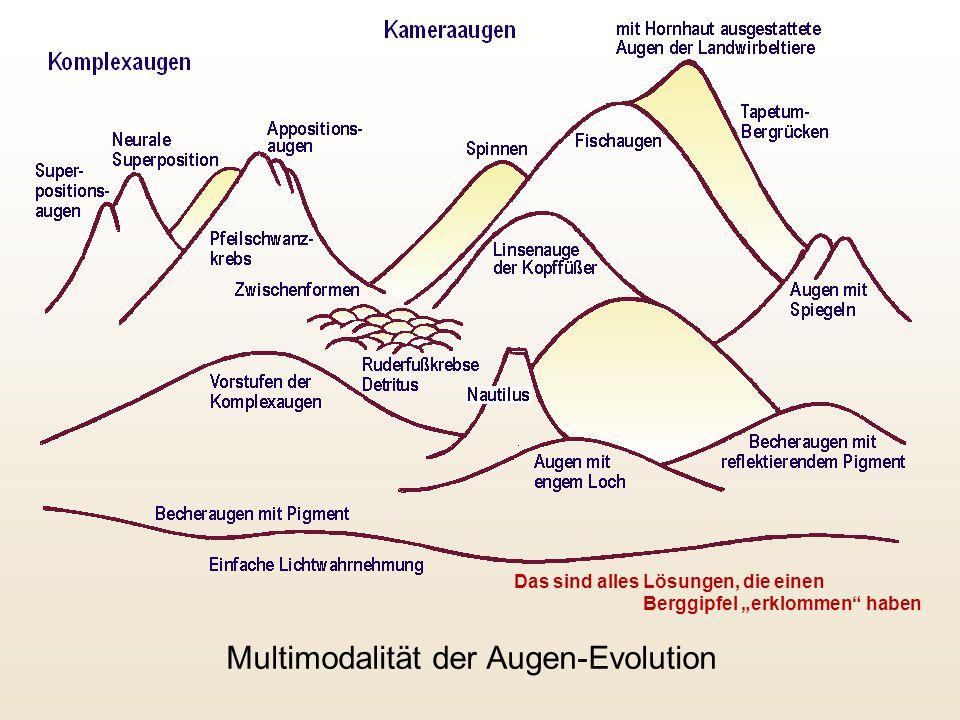 """Multimodalität der Augen-Evolution Das sind alles Lösungen, die einen Berggipfel """"erklommen"""" haben"""