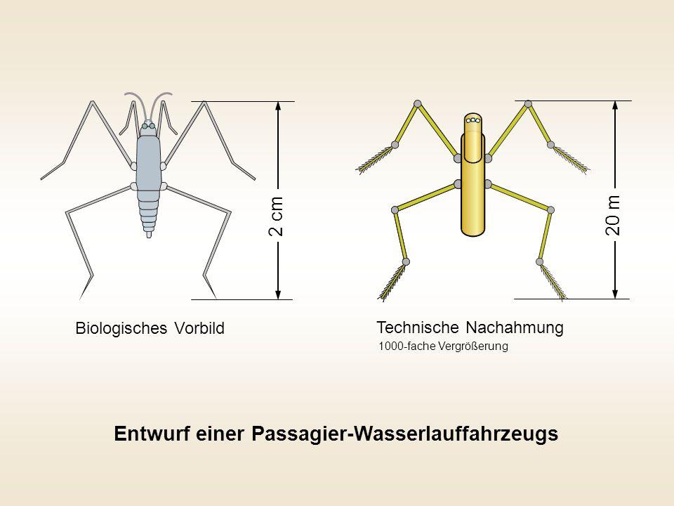 2 cm 20 m Biologisches Vorbild Technische Nachahmung Entwurf einer Passagier-Wasserlauffahrzeugs 1000-fache Vergrößerung