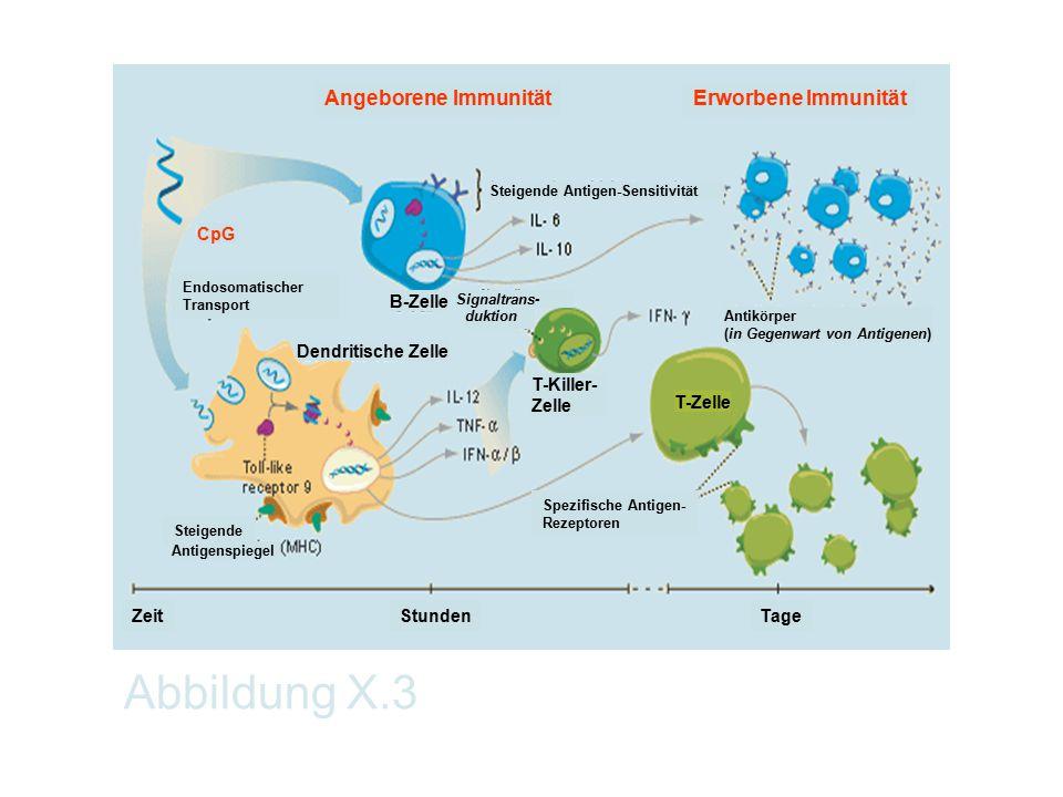 Abbildung X.3 Angeborene Immunität T-Zelle Zeit Spezifische Antigen- Rezeptoren Dendritische Zelle TageStunden B-Zelle T-Killer- Zelle Antikörper (in