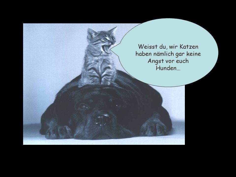Und meine Mutter hat gesagt dass wir Katzen alle viel viel schlauer sind als Hunde.